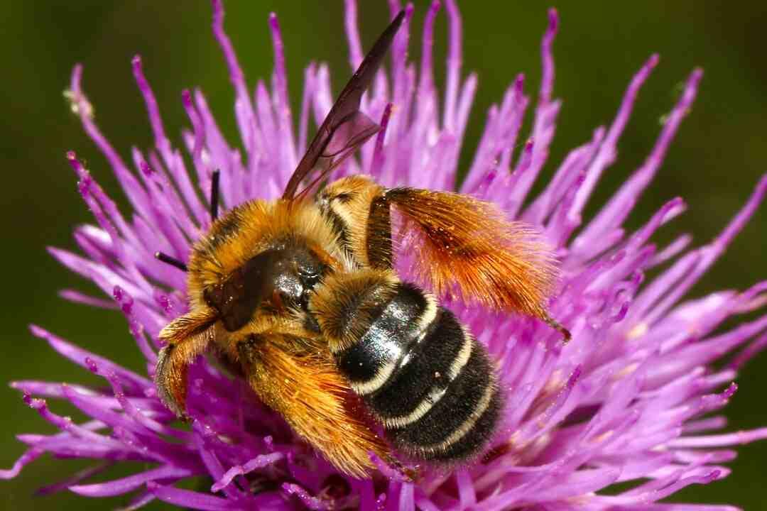 Comment faire un gloss à lèvres sans cire d'abeille